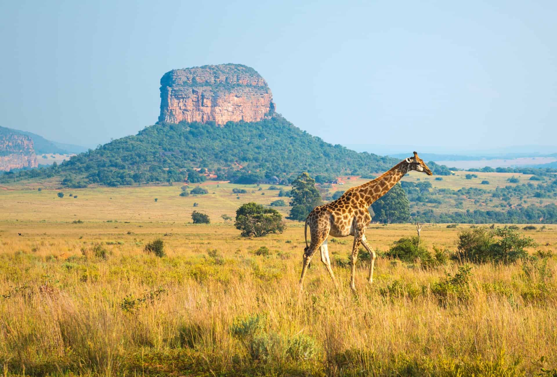 Limpopo Province, South Africa.
