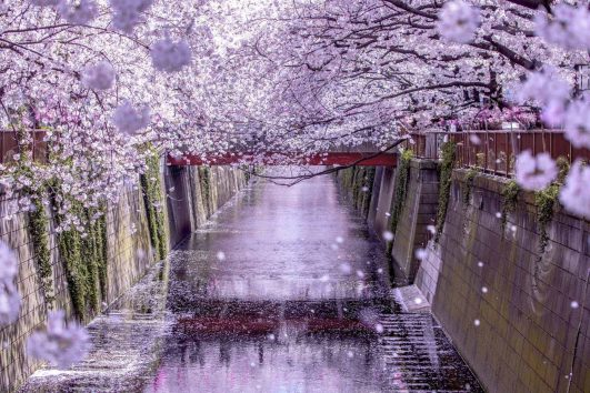 Specialist Escorted Small Group cultural Tours exploring Japan