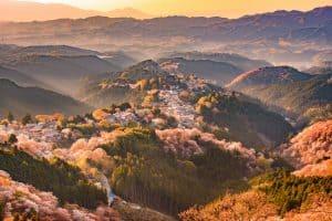 Japan Cherry Blossom, Kyoto