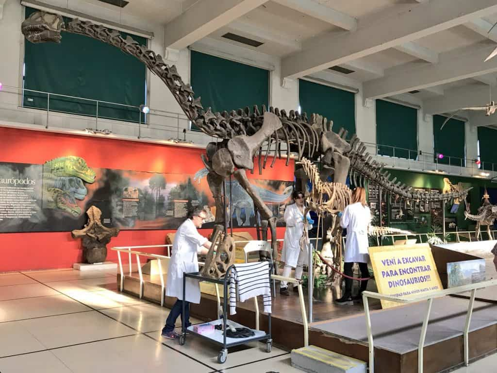 Carnivore Piatnitzkysaurus gets a spring clean at the Argentine Museum of Natural Science in Buenos Aires