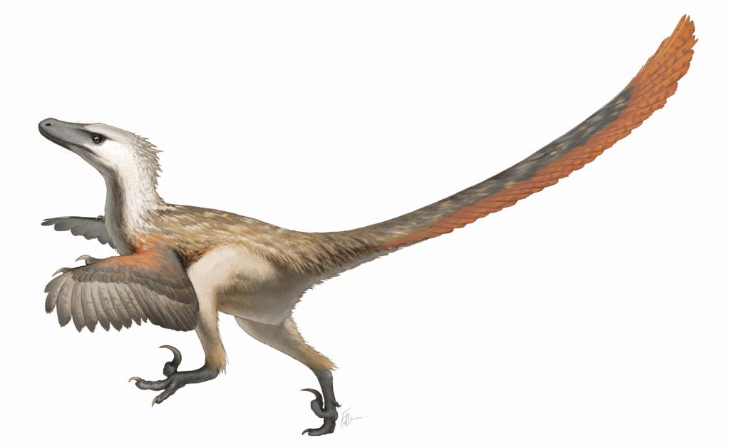 Velociraptor_Restoration