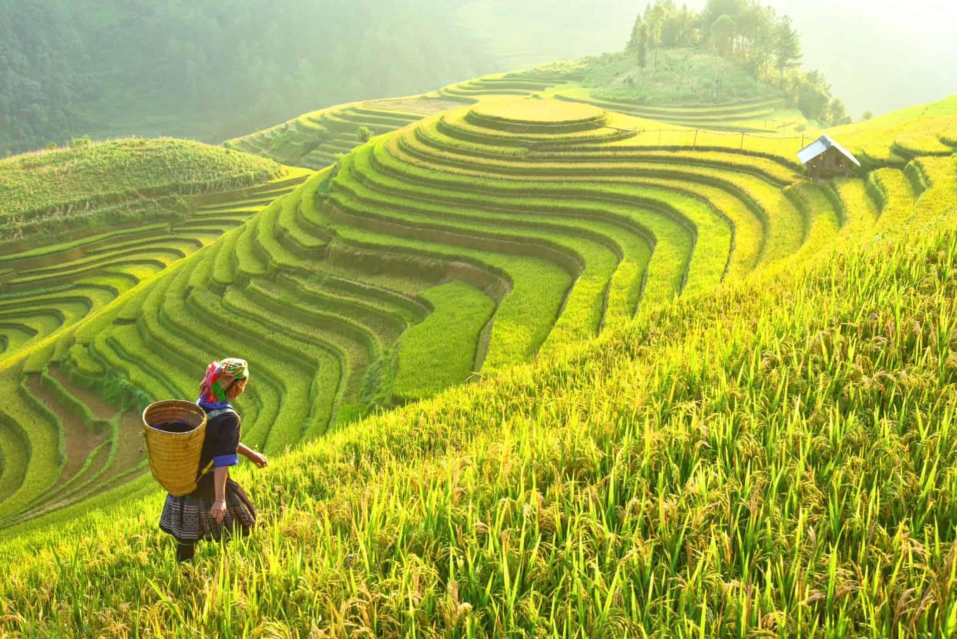 Rice fields on terraced of Mu Cang Chai, YenBai, in northwest Vietnam