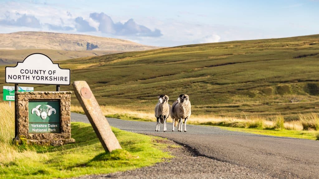 Two sheep as boarder guards to the Yorkshire Dales, seen on the B6270 road between Kirkby Stephen and Gunnerside, North Yorkshire, UK