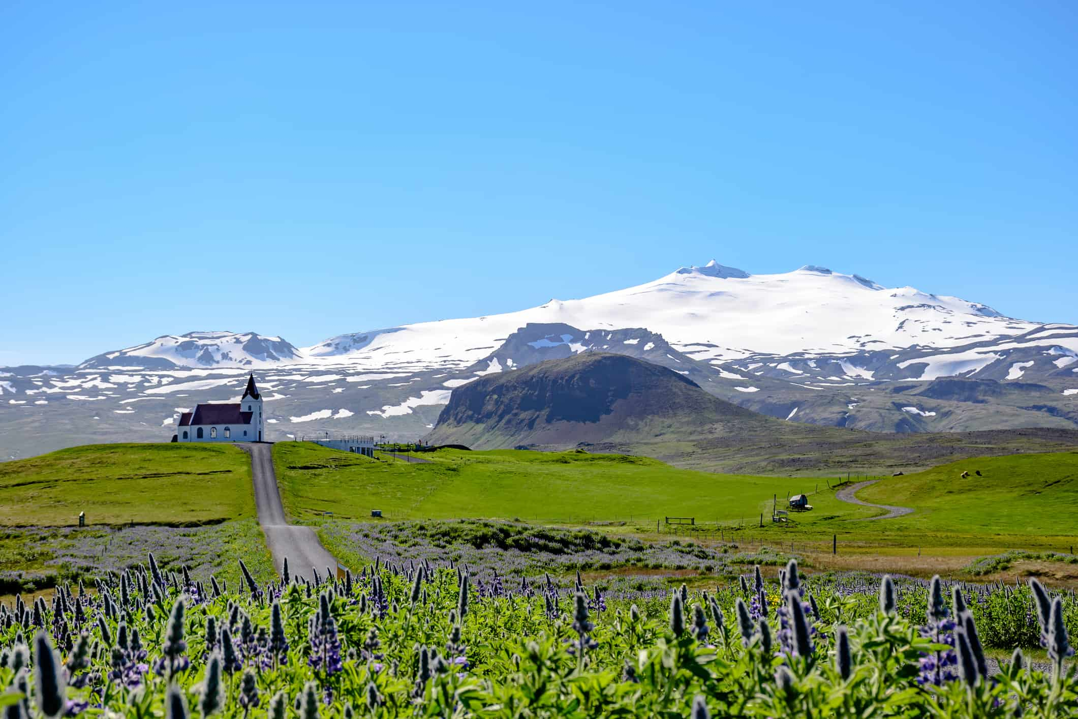 Church near Hellisandur, next to Snaefellsjokull, in Iceland. Lavender field and blue and clear day.