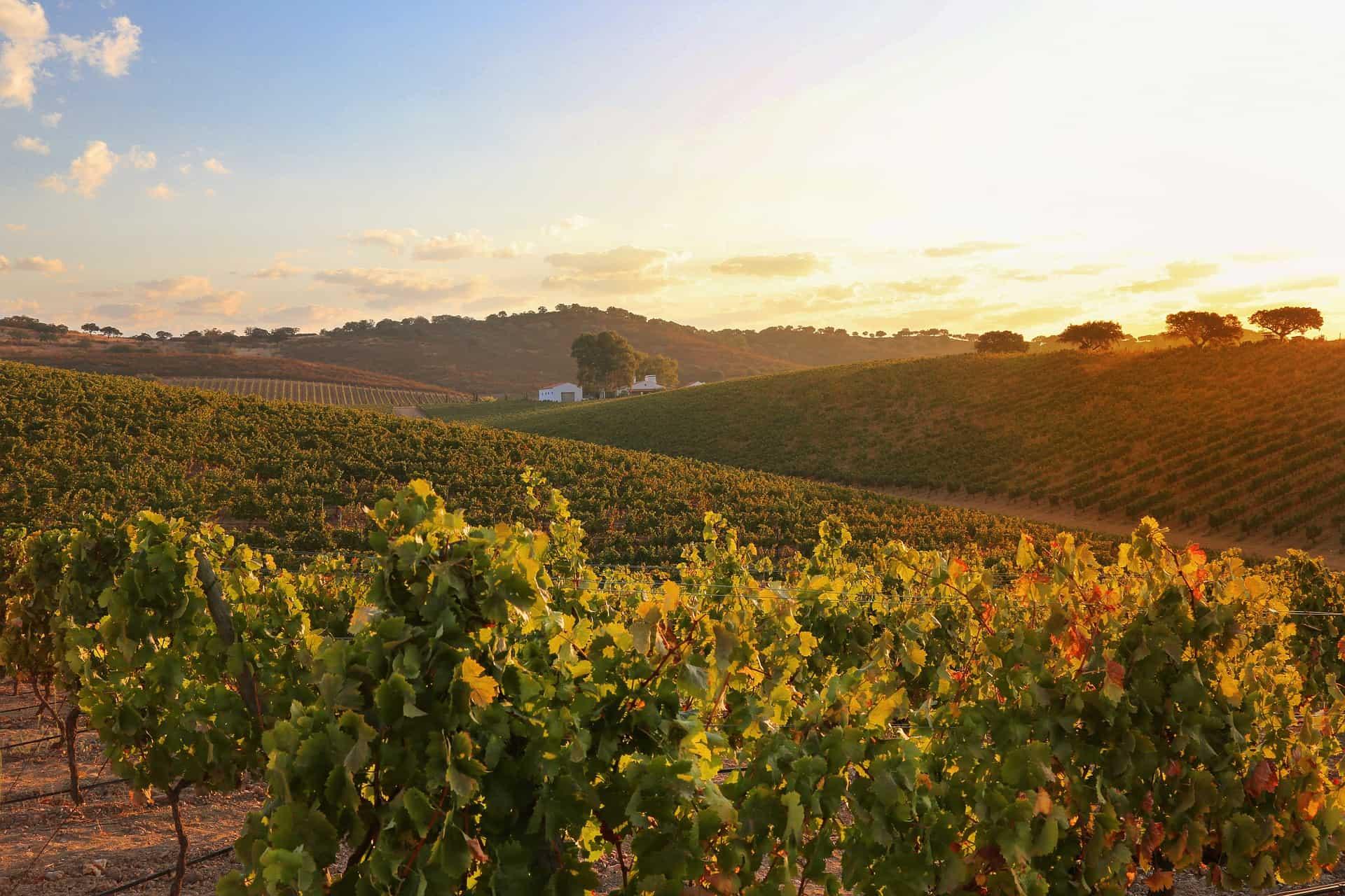 A winery in Alentejo