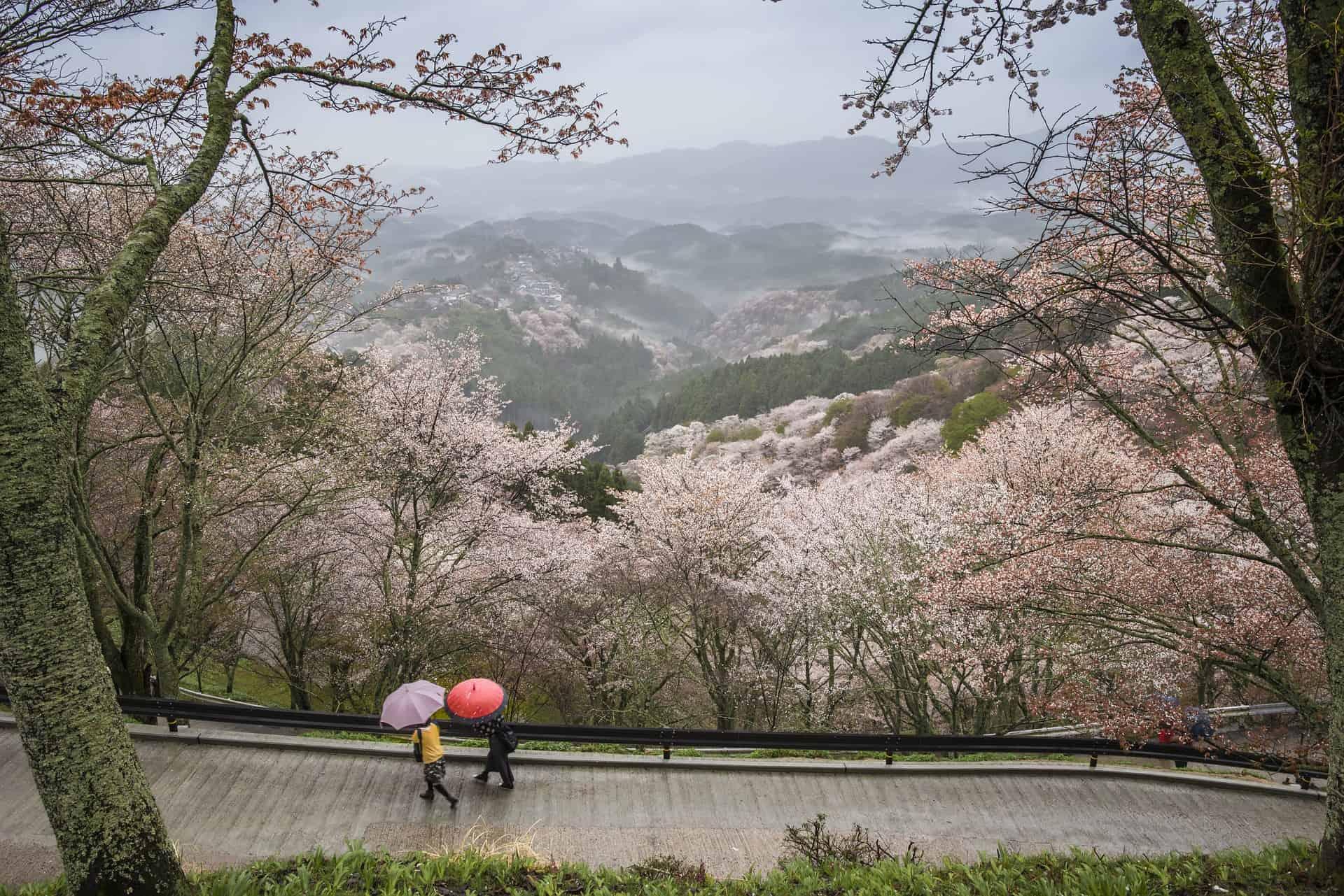 Nara prefecture Japan landscape