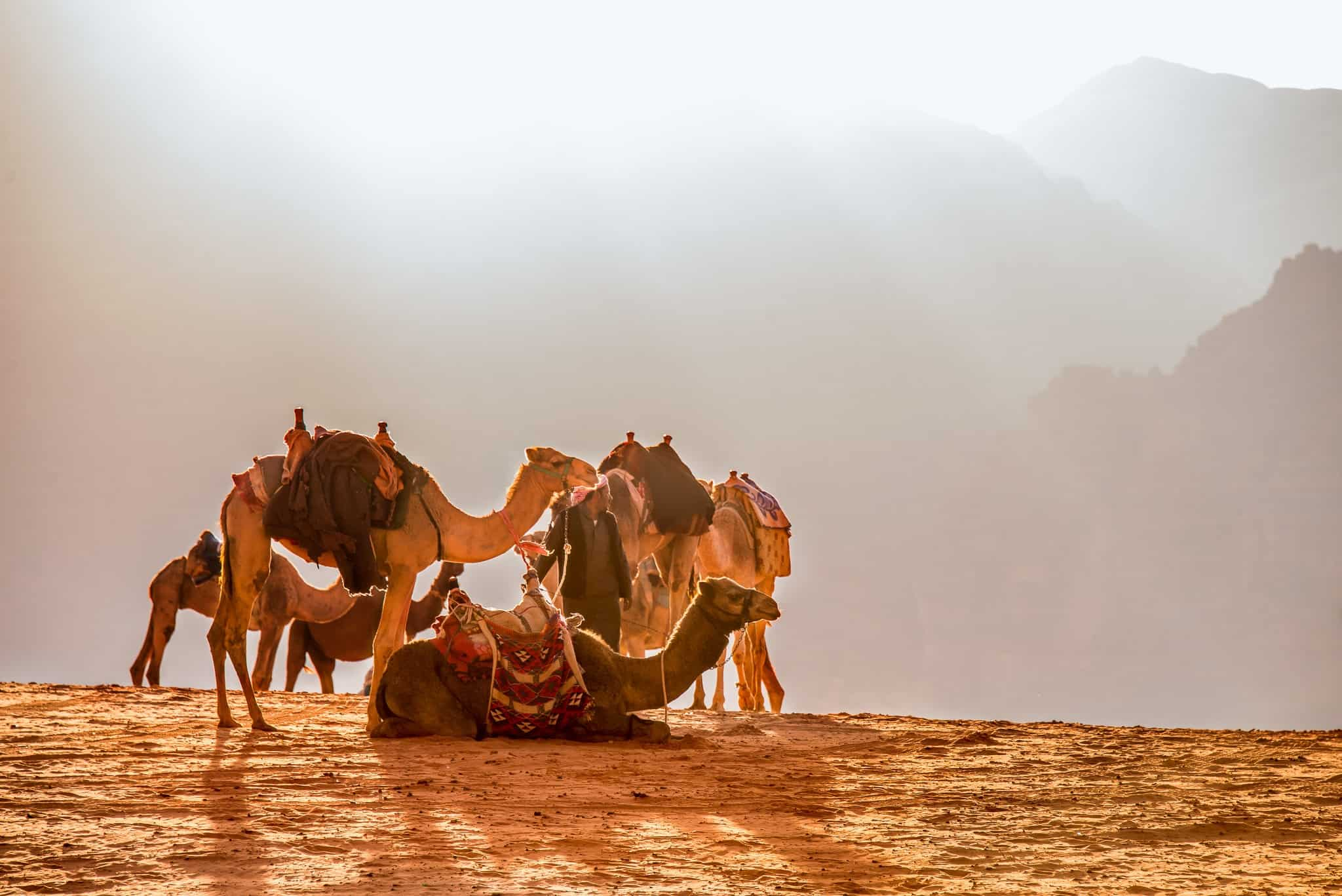 A scene with camels in the Jordan desert