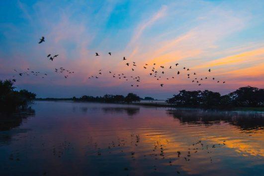 Birds flying in Kakadu NP Northern Territory