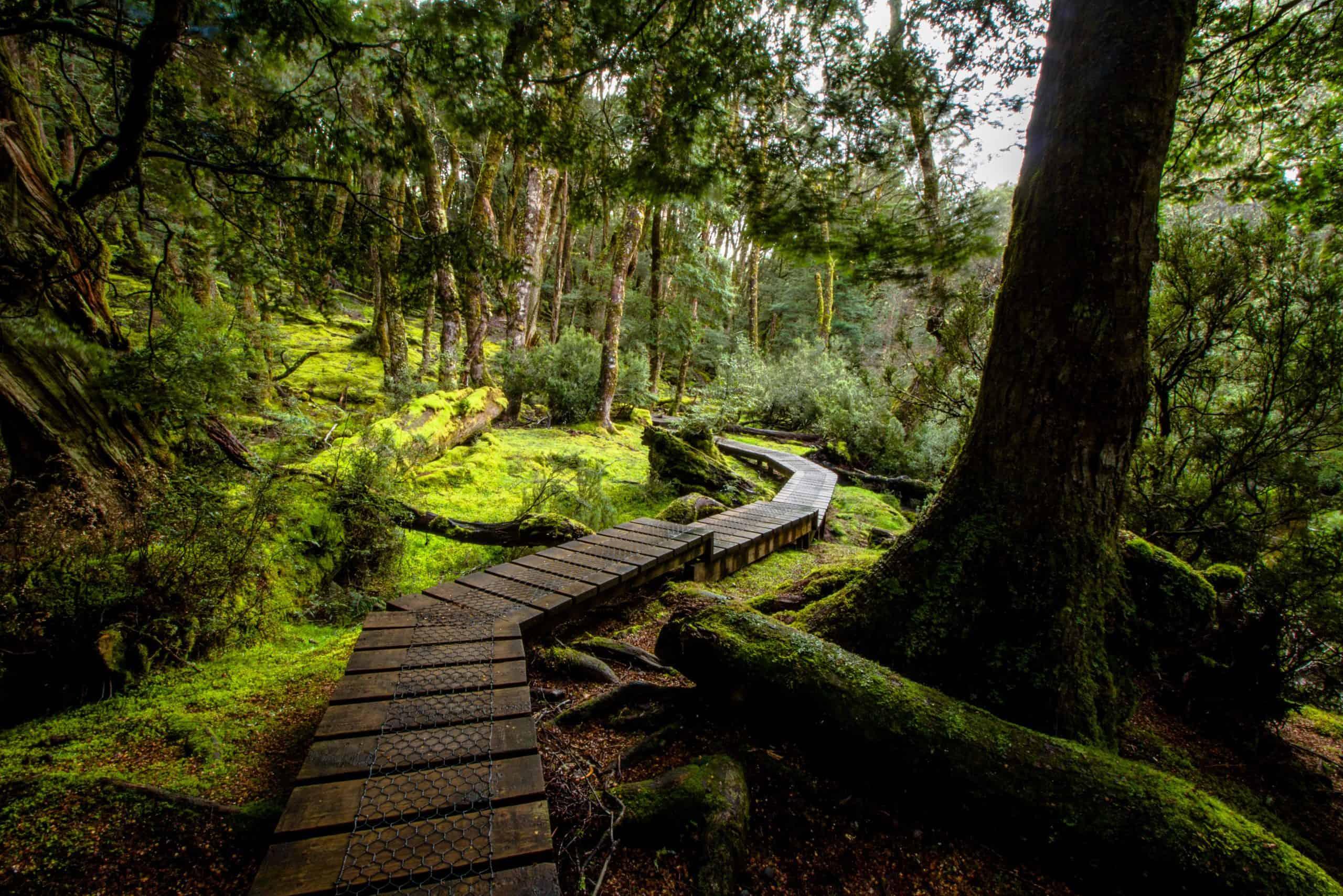 Cradle Mountain rainforests
