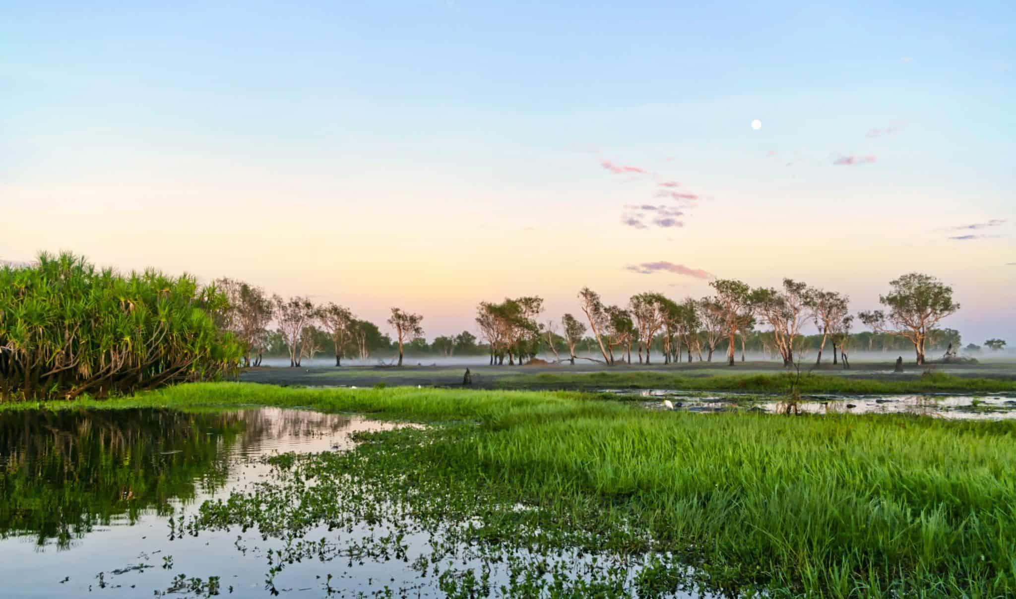 Wetlands Kakadu