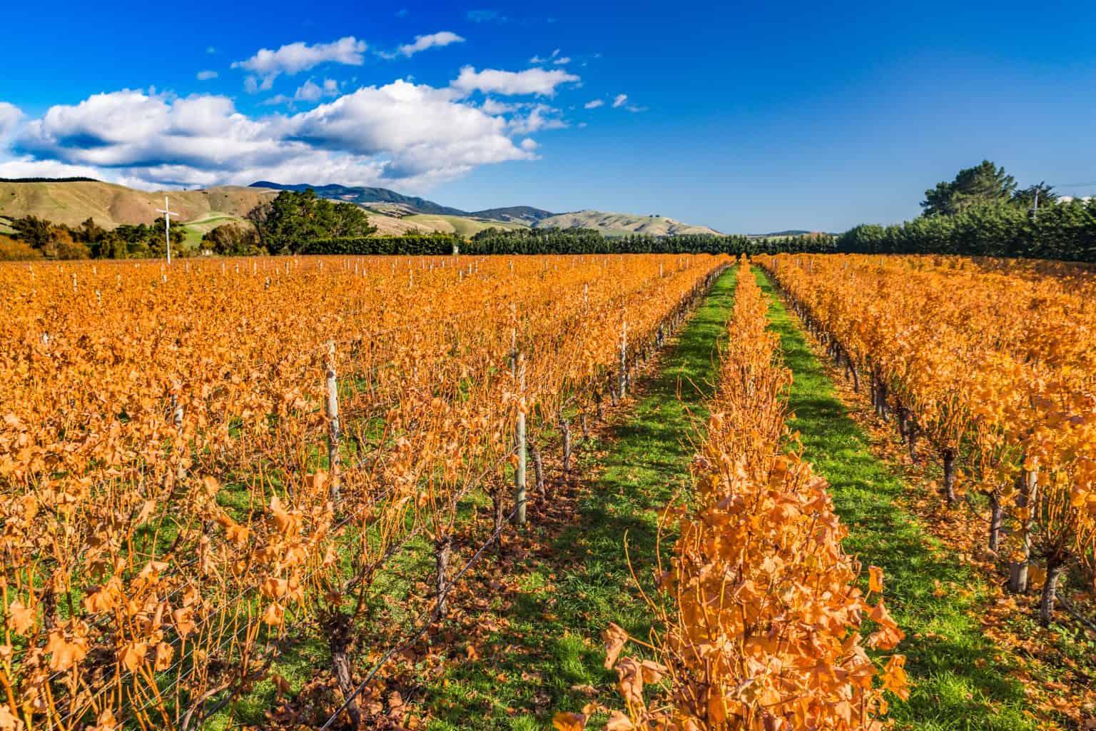 Martinborough New Zealand